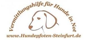 H_Pfoten Steinfurt